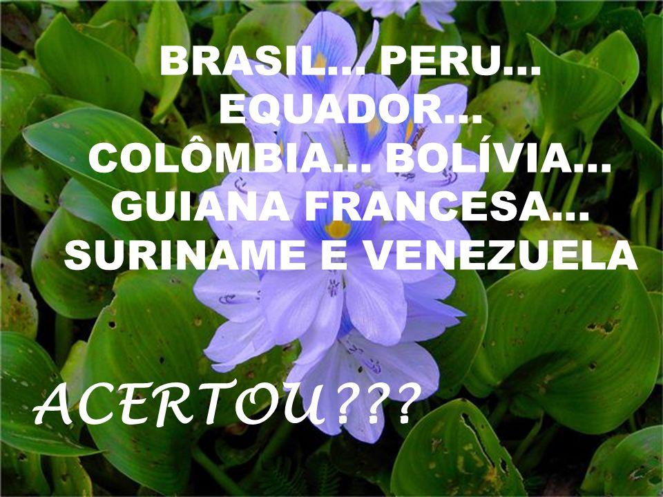 BRASIL...PERU... EQUADOR... COLÔMBIA... BOLÍVIA...