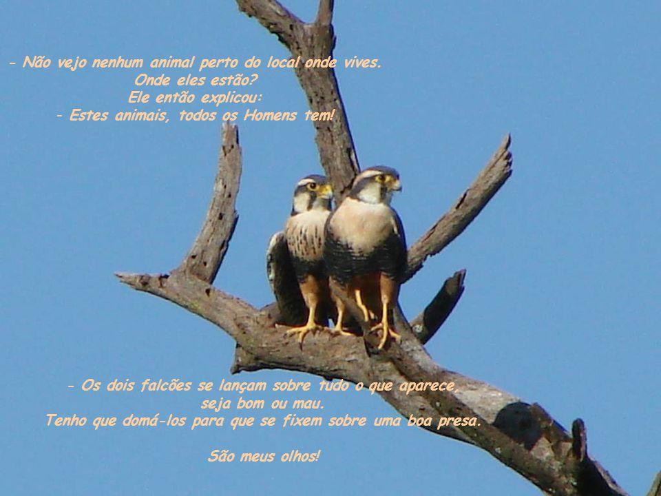 - Os dois falcões se lançam sobre tudo o que aparece, seja bom ou mau.
