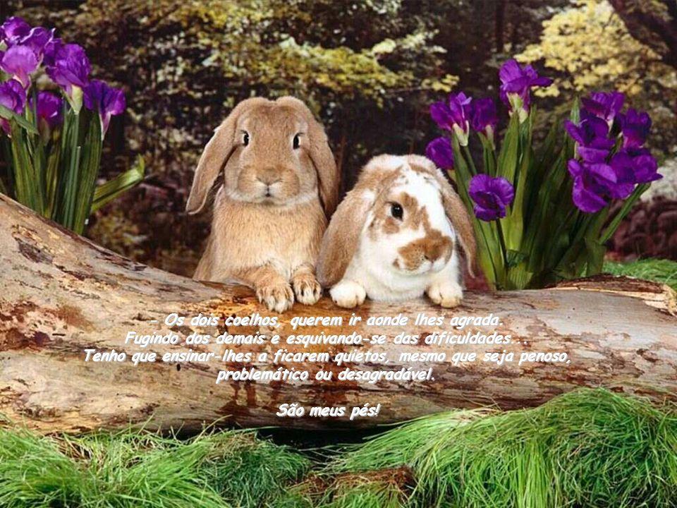 - Os dois coelhos, querem ir aonde lhes agrada.