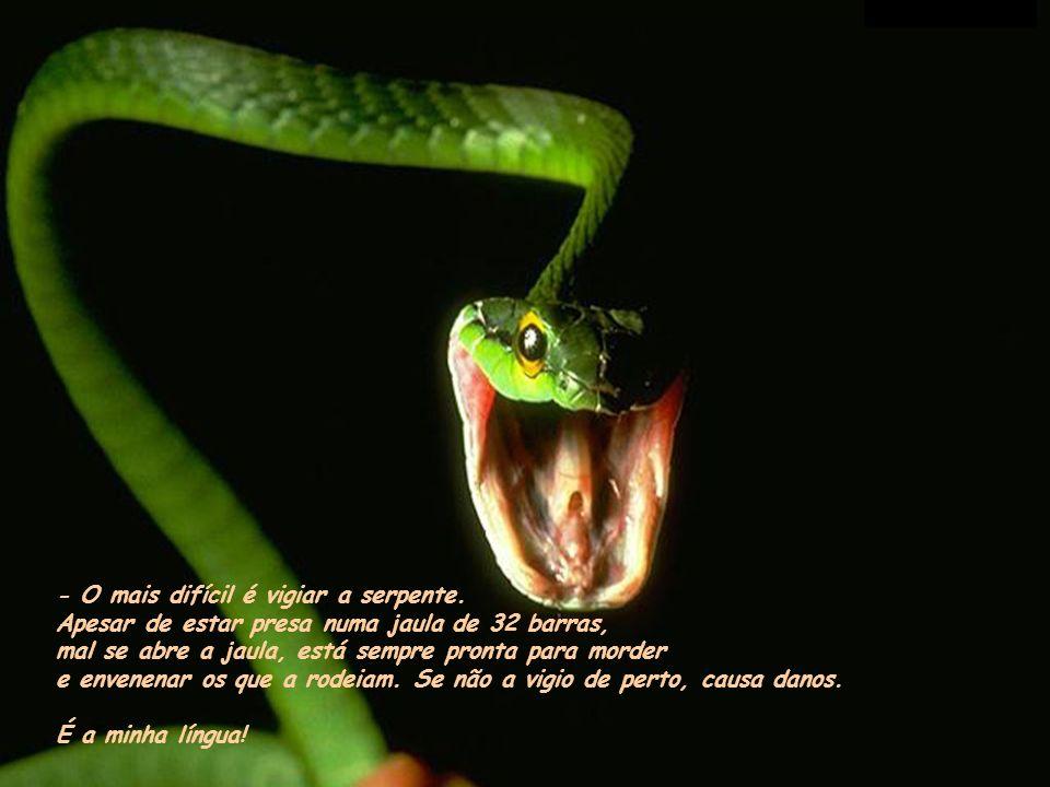 - O mais difícil é vigiar a serpente.