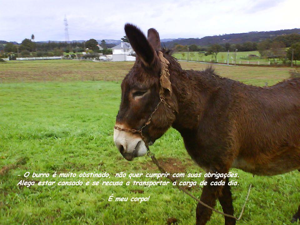 - O burro é muito obstinado, não quer cumprir com suas obrigações.