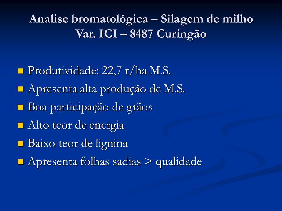 Analise bromatológica – Silagem de milho Var. ICI – 8487 Curingão Produtividade: 22,7 t/ha M.S. Produtividade: 22,7 t/ha M.S. Apresenta alta produção