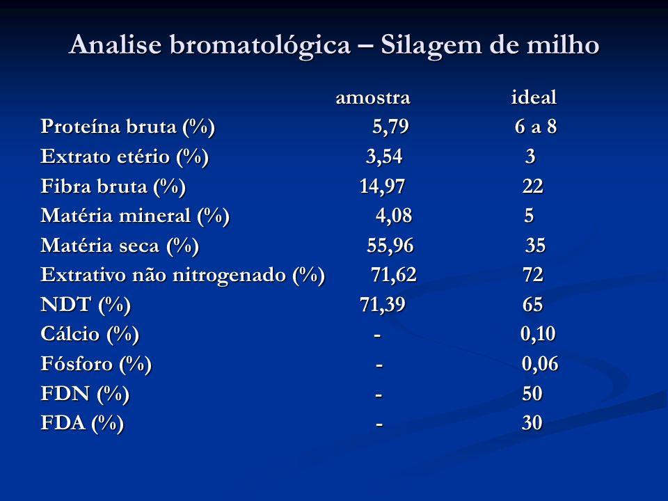 Analise bromatológica – Silagem de milho amostra ideal amostra ideal Proteína bruta (%) 5,79 6 a 8 Extrato etério (%) 3,54 3 Fibra bruta (%) 14,97 22