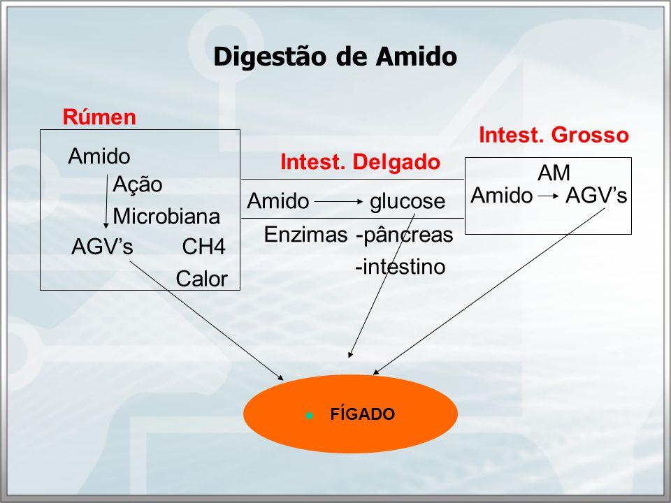 Fatores que afetam a digestibilidade do amido Fonte de amido Processamento do grão Teor de amilose x amilopectina Matrizes e corpos protéicos Endosperma farináceo x córneo Teor de amido da dieta