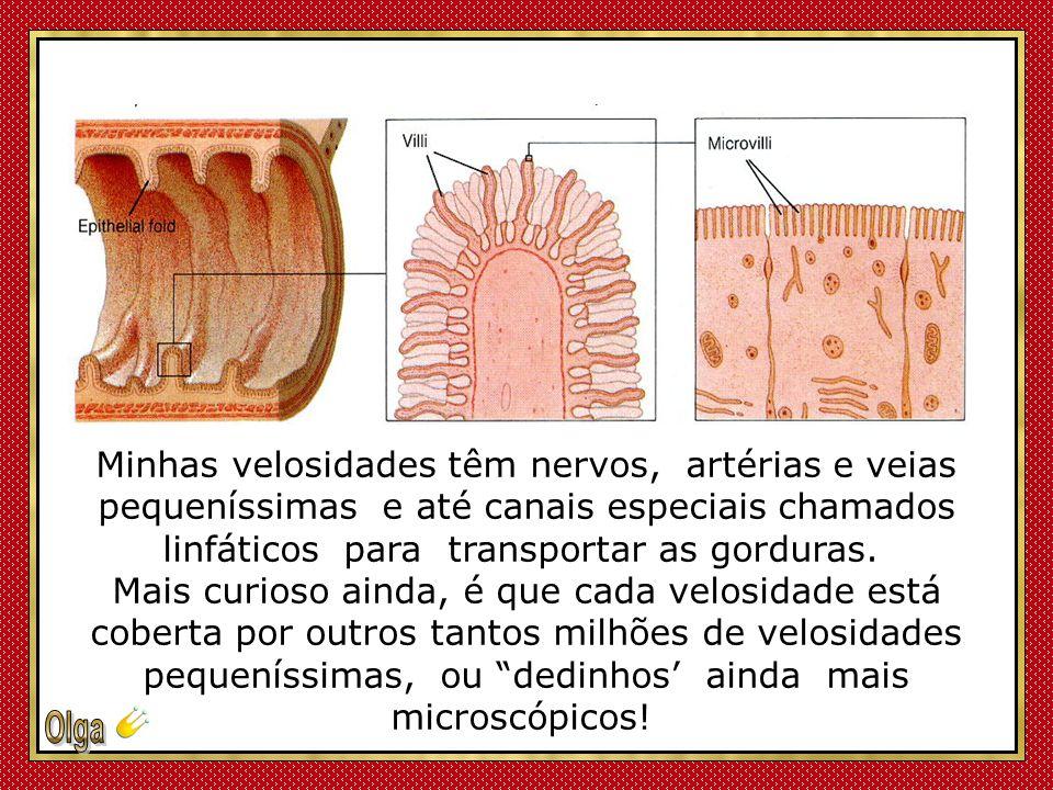 É na mucosa do meu jejuno, que acontece o milagre de sua digestão ! Minha parede interna é composta por pregas com milhões de velosidades (vili ou pel