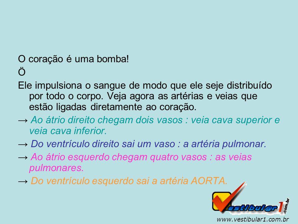 www.vestibular1.com.br Como ocorre a circulação.