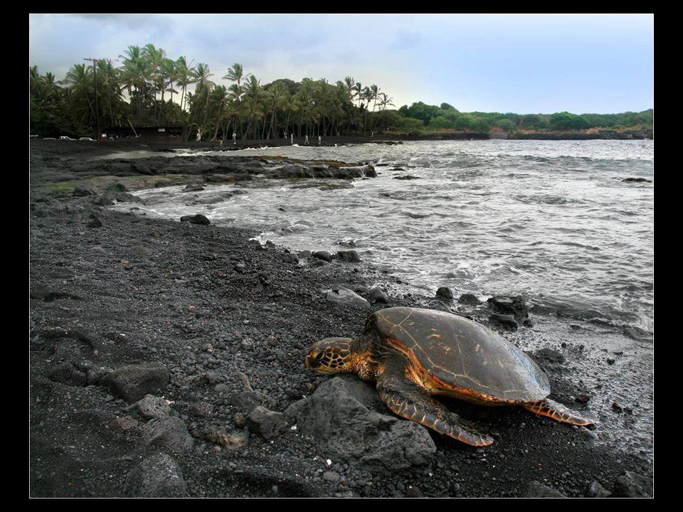 Punaluu é uma praia entre Pahala y Na Alehu, no Hawaii. A areia negra provém do basalto depositado pela lava vulcânica, característica que se repete t