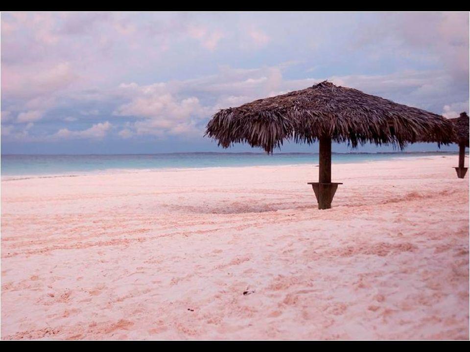 A praia Pink Sand Coral é uma praia com muitas palmeiras e de areia cor de rosa na ilha de Harbour, nas Bahamas. Sua cor rósea se deve à sedimentação