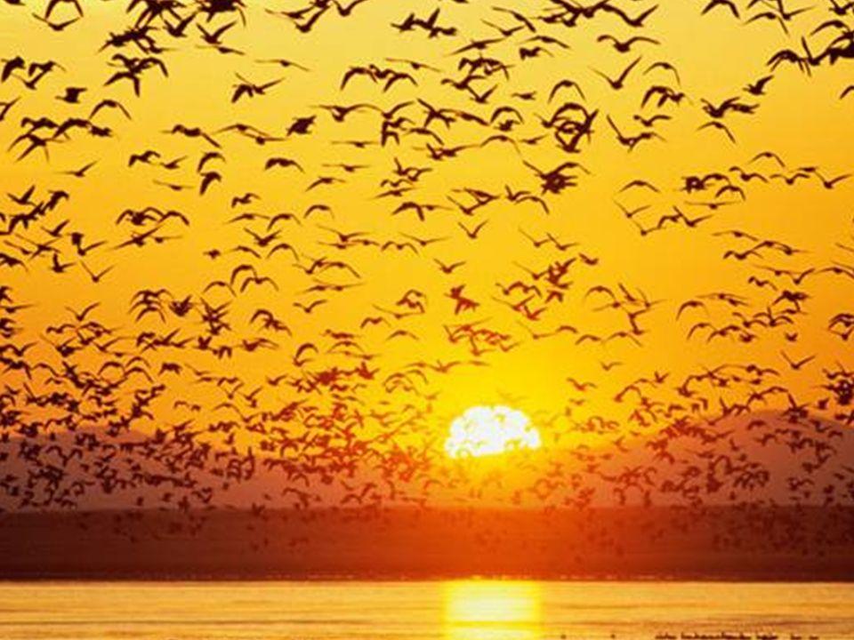 Você não existe separado da natureza, somos um só… uma única energia! Você é aceito por todo esse universo. Deleite-se nele! Você é aceito pelo sol, v