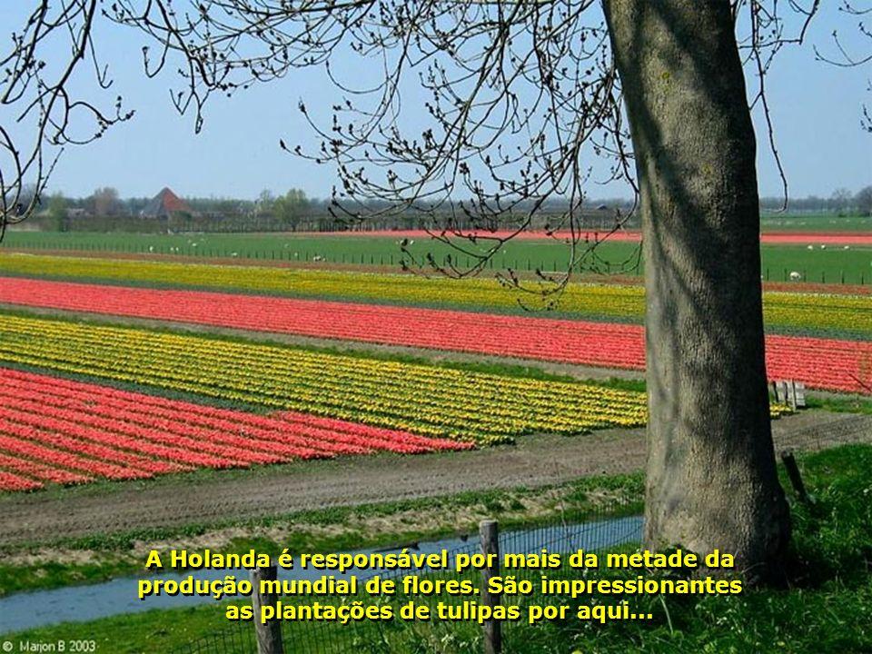 Amsterdã é, também, a cidade das tulipas, que florescem no mês de abril. Esta é a cidade dos tamancos, dos diamantes e da porcelana...