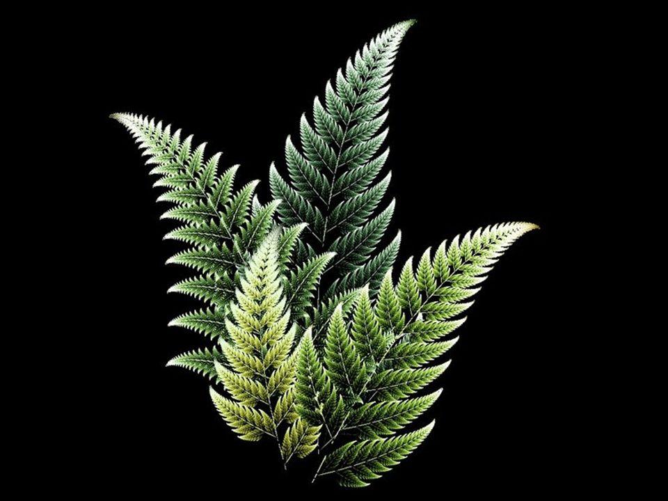 Os fractais deram origem a um novo ramo da matemática, muitas vezes designado como a geometria da natureza.