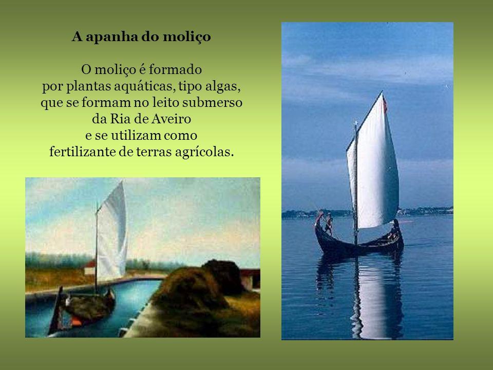 Barco Moliceiro