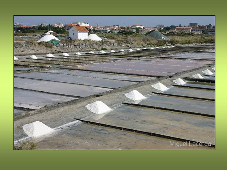 Em terreno com cerca de 1300 hectares, a oeste e a norte da cidade, estão situadas as marinhas de sal de Aveiro.