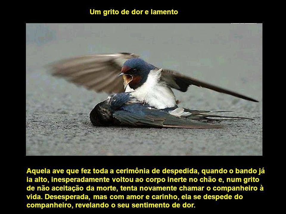 Segundo o relato de testemunhas, dezenas de aves, antes de partirem, sobrevoaram o corpinho do companheiro morto. As fotos mostram quanta verdade exis