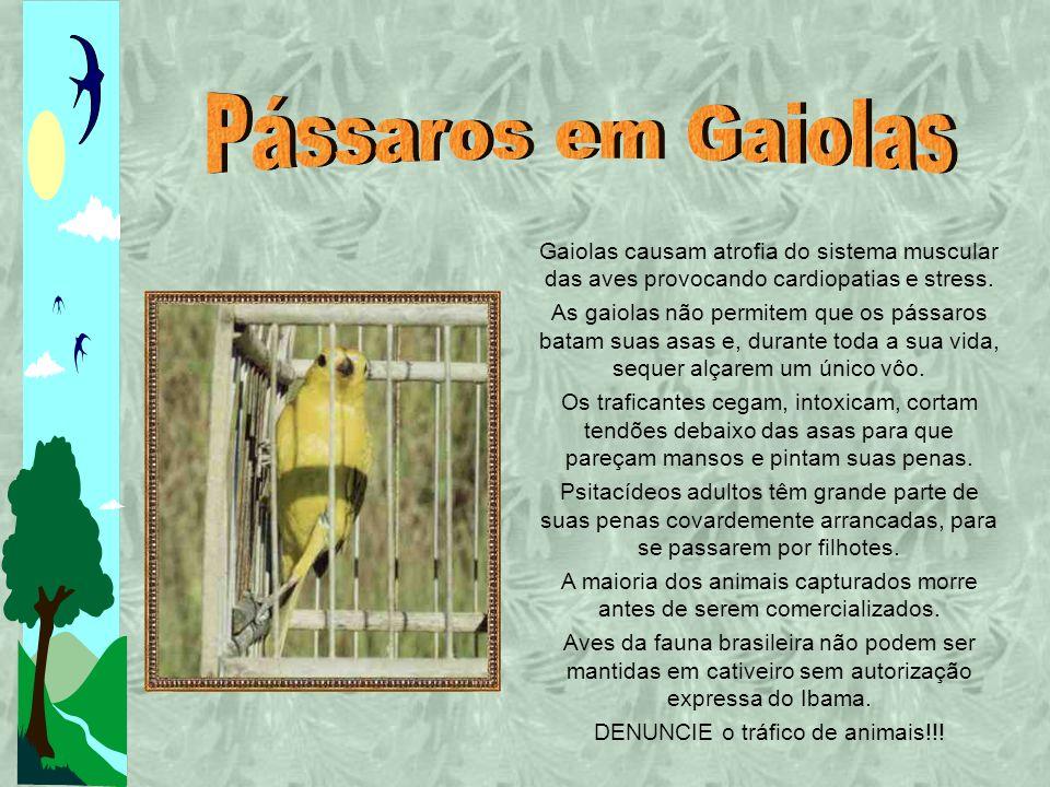 Gaiolas causam atrofia do sistema muscular das aves provocando cardiopatias e stress.