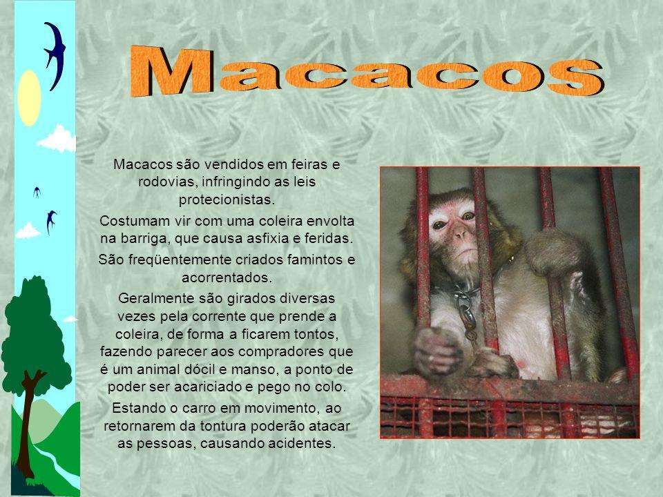 Macacos são vendidos em feiras e rodovias, infringindo as leis protecionistas.