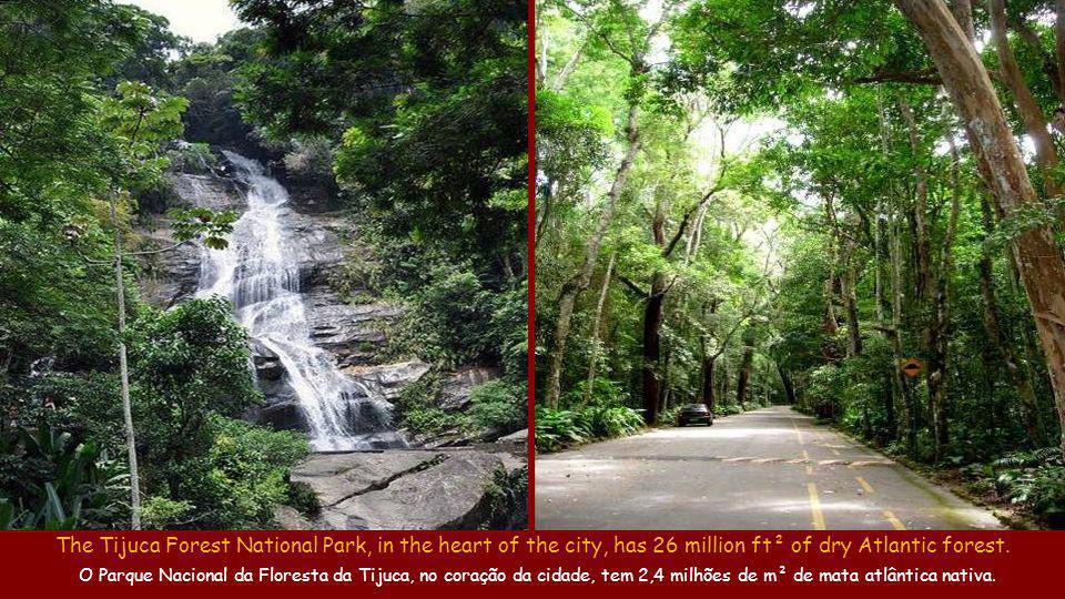 de O Aterro do Flamengo (1,2M m²), um Jardim Botânico a céu aberto, possui 11.600 árvores de 190 espécies nativas e exóticas.