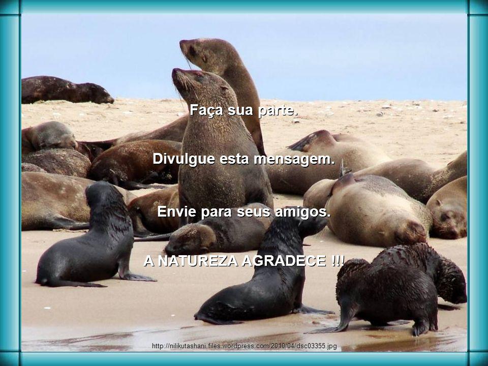 news.howzit.msn.com africanconservation.org todayy.blogspot.com No Canadá também acontece a matança anual de bebês focas para a confecção de casacos d