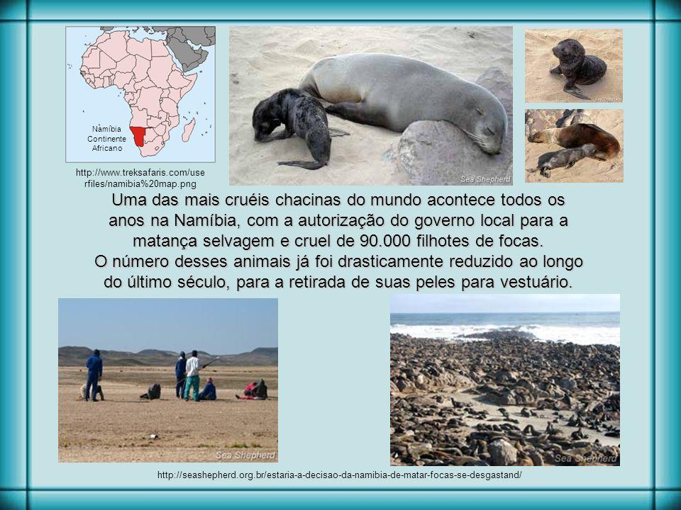 http://mnmworldtrip.files.wordpress.com/2011/06/swakopmund-seals19.jpg Rildo Silveira Criado por rildosilveira@yahoo.com.br hilldoveg@gmail.com rildos