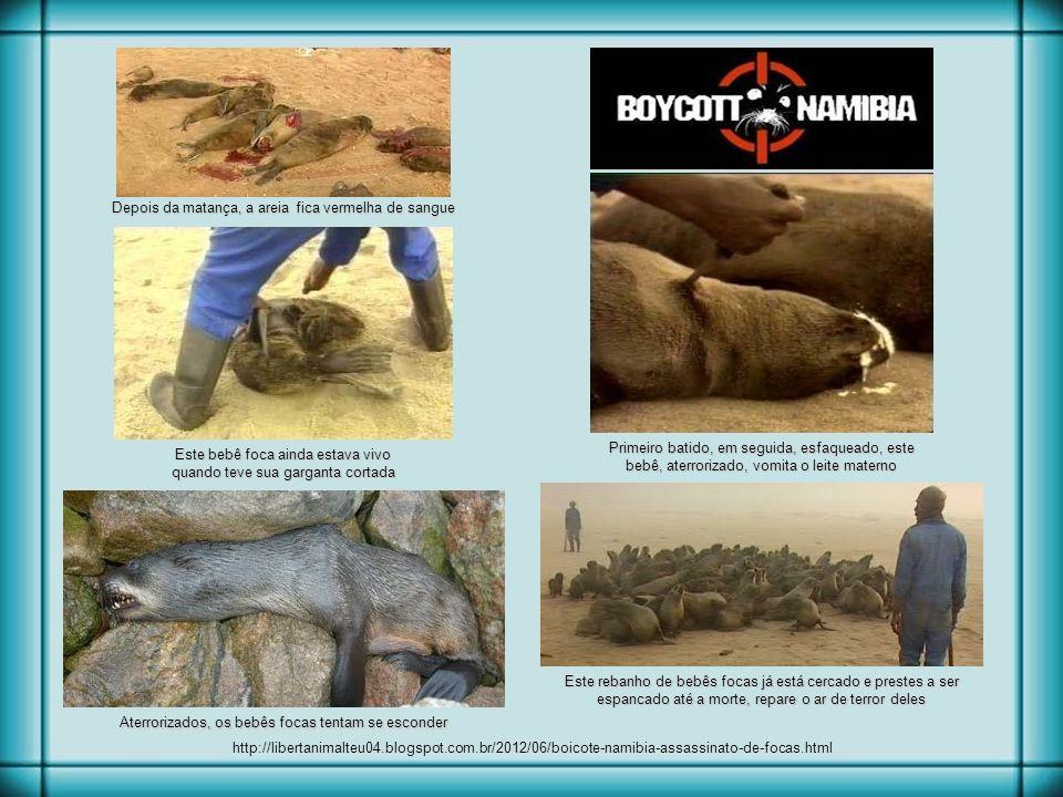 Uma das mais cruéis chacinas do mundo acontece todos os anos na Namíbia, com a autorização do governo local para a matança selvagem e cruel de 90.000