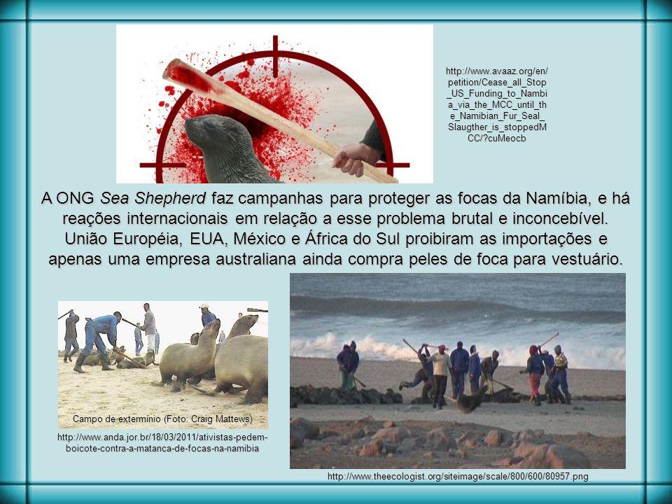 http://libertanimalteu04.blogspot.com.br/2012/06/boicote-namibia-assassinato-de-focas.html Aterrorizados, os bebês focas tentam se esconder Depois da