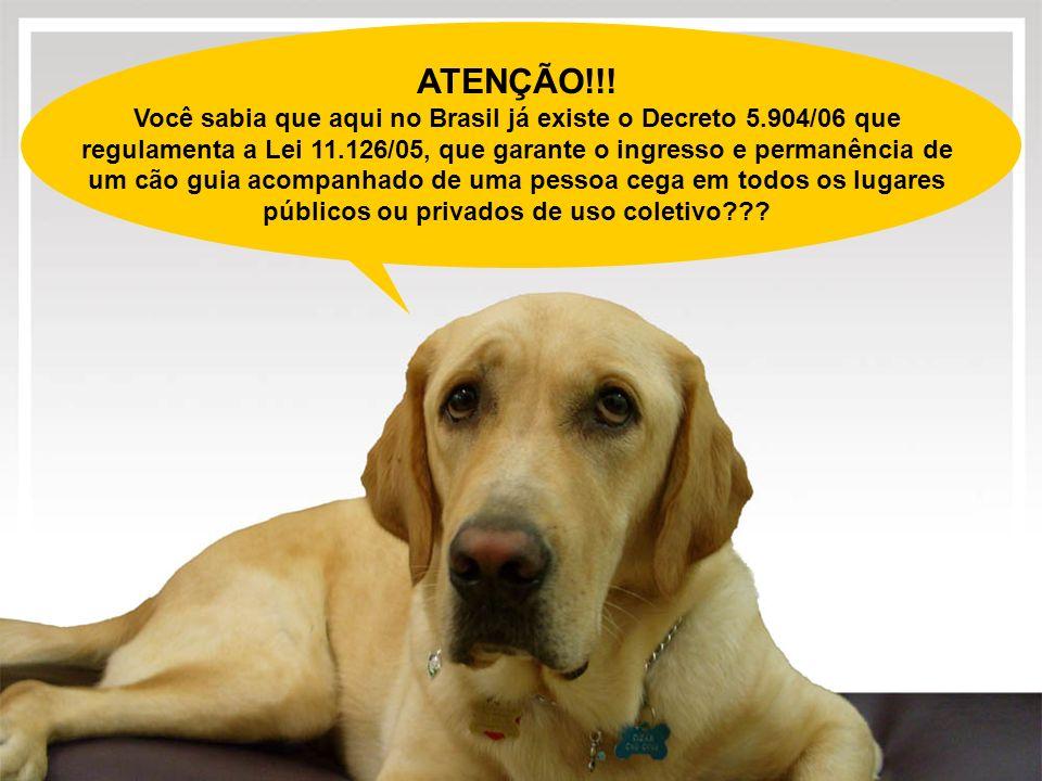 ATENÇÃO!!! Você sabia que aqui no Brasil já existe o Decreto 5.904/06 que regulamenta a Lei 11.126/05, que garante o ingresso e permanência de um cão