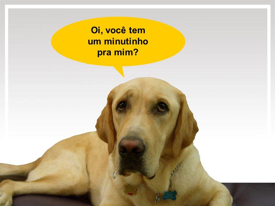 Sou um cão guia, vim de Smithtown - N.Y.para trabalhar aqui no Rio de Janeiro.