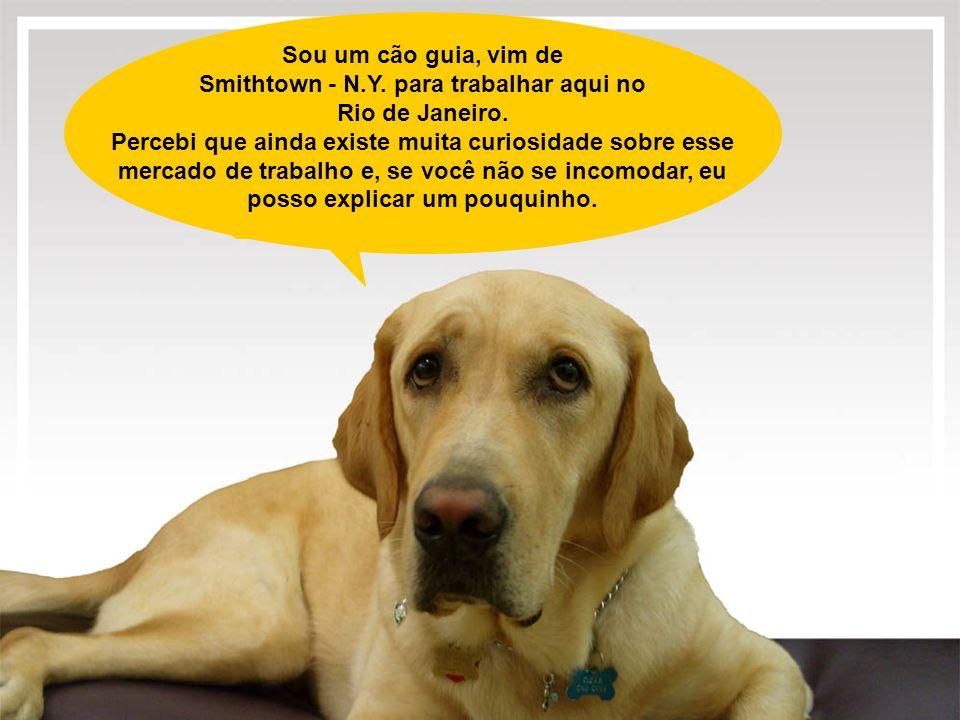 Sou um cão guia, vim de Smithtown - N.Y. para trabalhar aqui no Rio de Janeiro. Percebi que ainda existe muita curiosidade sobre esse mercado de traba