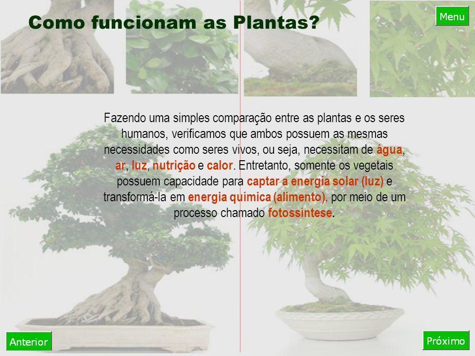 Fazendo uma simples comparação entre as plantas e os seres humanos, verificamos que ambos possuem as mesmas necessidades como seres vivos, ou seja, necessitam de água, ar, luz, nutrição e calor.