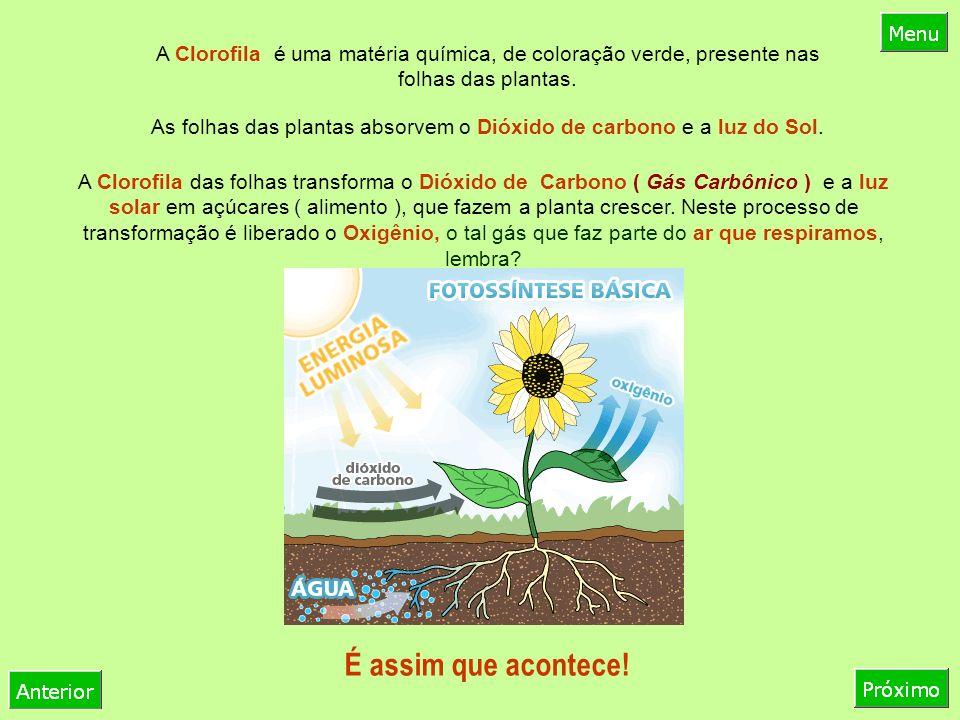 As folhas das plantas absorvem o Dióxido de carbono e a luz do Sol.