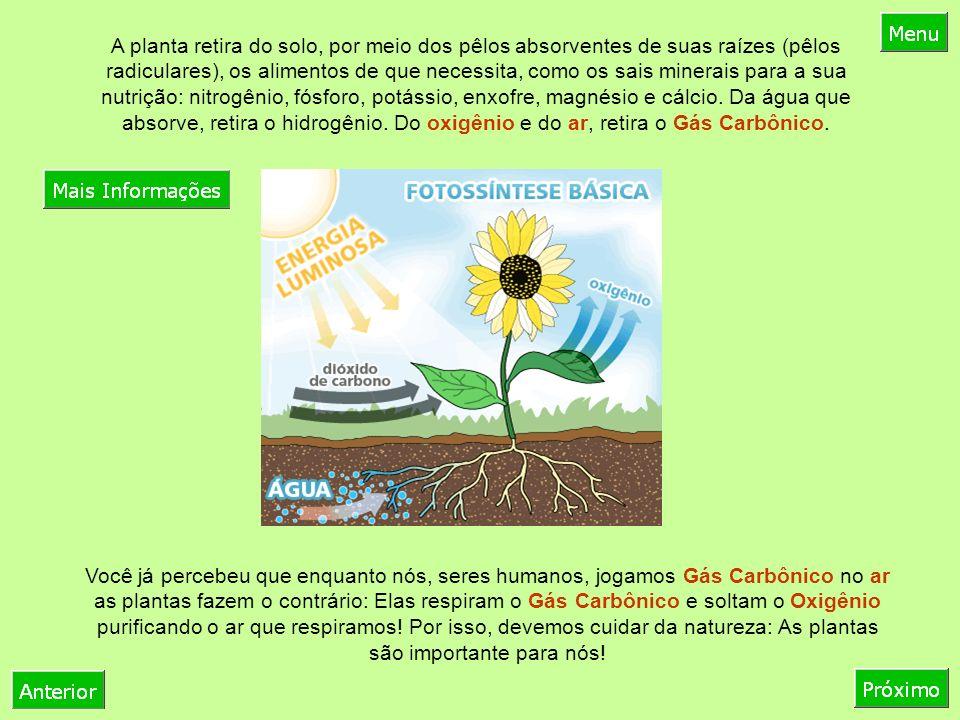 Você já percebeu que enquanto nós, seres humanos, jogamos Gás Carbônico no ar as plantas fazem o contrário: Elas respiram o Gás Carbônico e soltam o Oxigênio purificando o ar que respiramos.