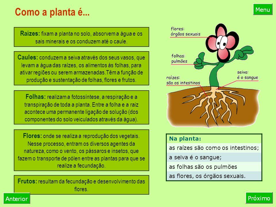 Como a planta é...
