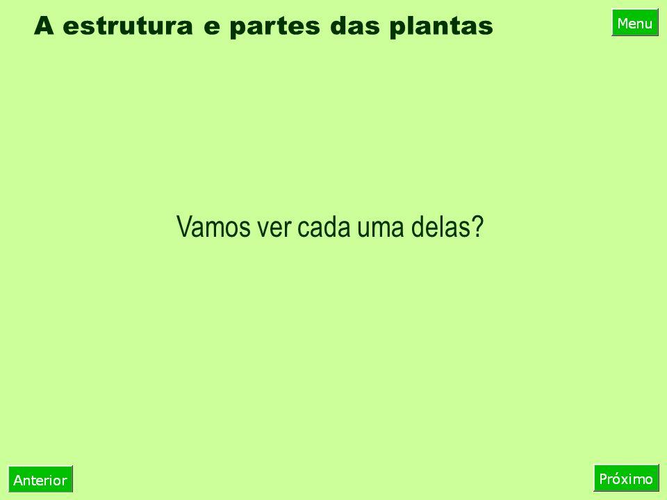 A estrutura e partes das plantas Vamos ver cada uma delas?
