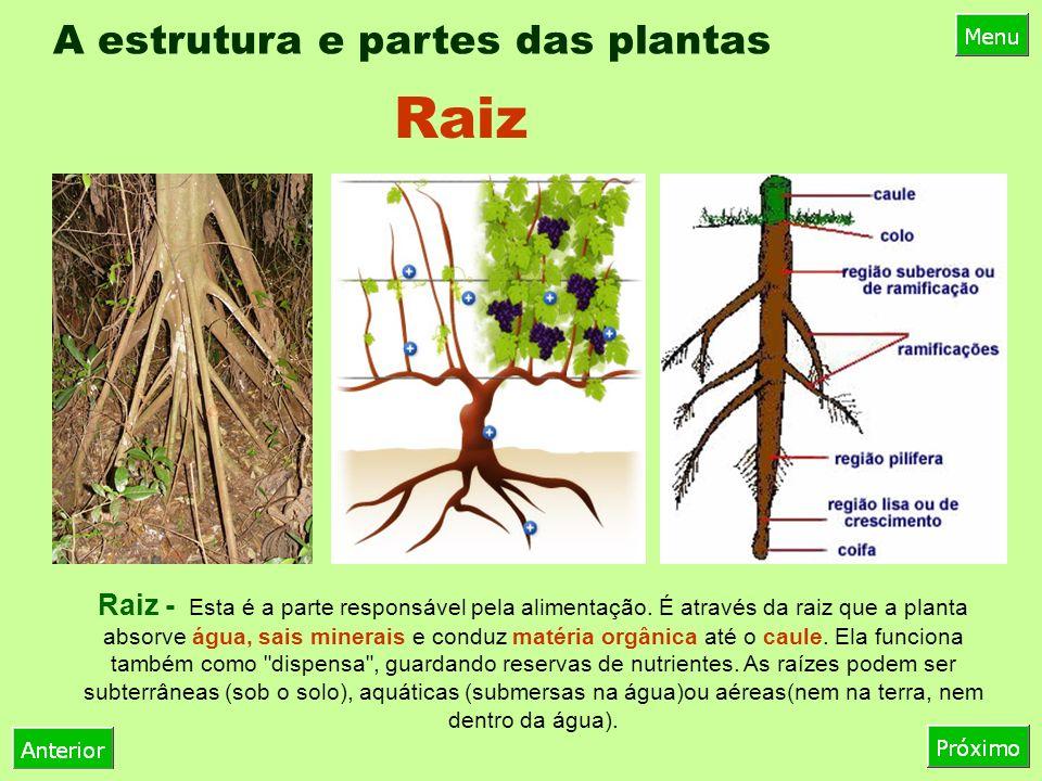 A estrutura e partes das plantas Raiz - Esta é a parte responsável pela alimentação.