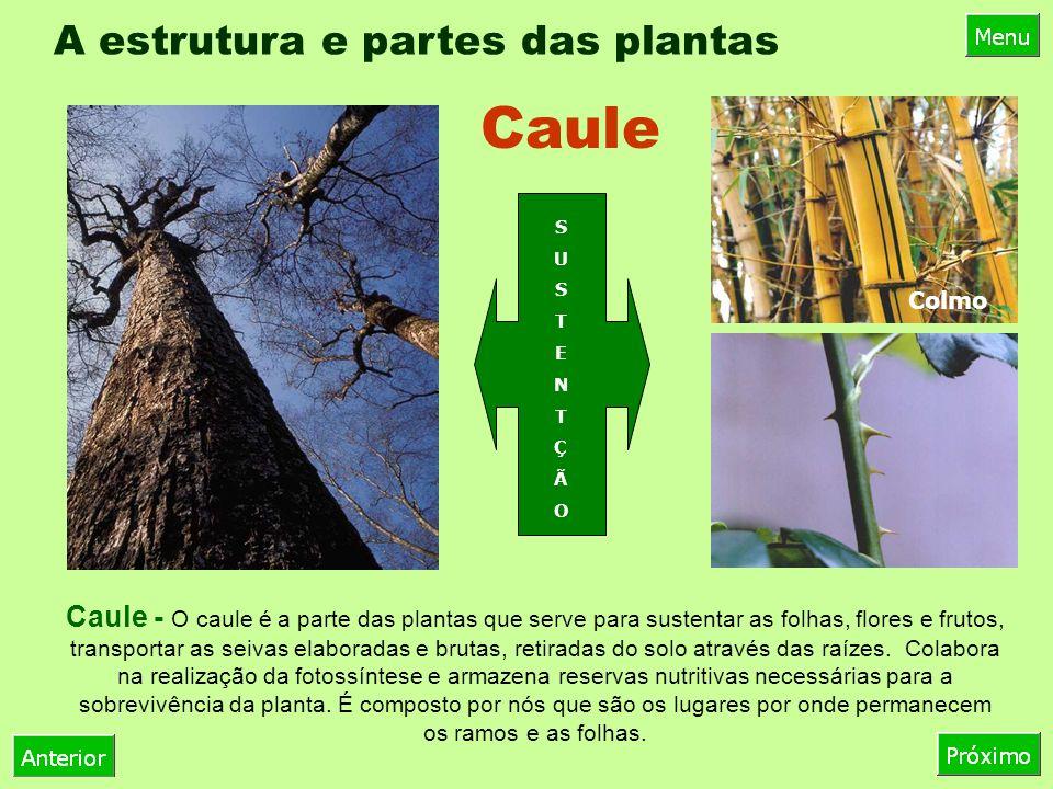 A estrutura e partes das plantas Caule - O caule é a parte das plantas que serve para sustentar as folhas, flores e frutos, transportar as seivas elaboradas e brutas, retiradas do solo através das raízes.