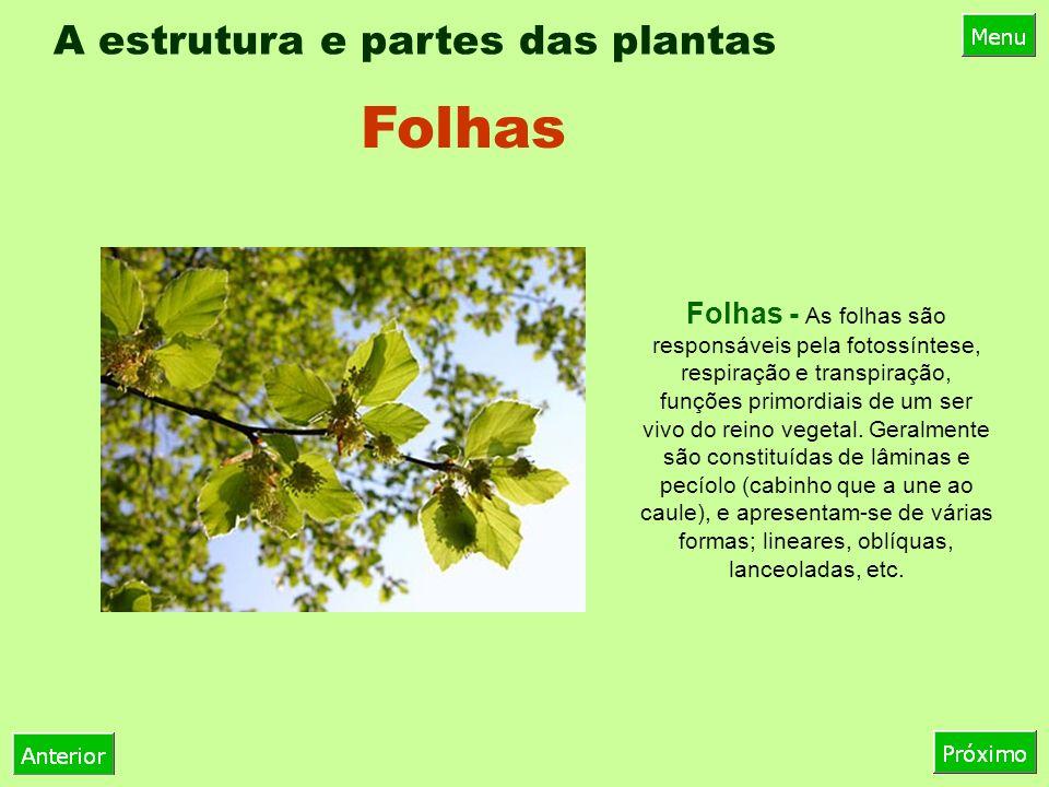 A estrutura e partes das plantas Folhas - As folhas são responsáveis pela fotossíntese, respiração e transpiração, funções primordiais de um ser vivo do reino vegetal.
