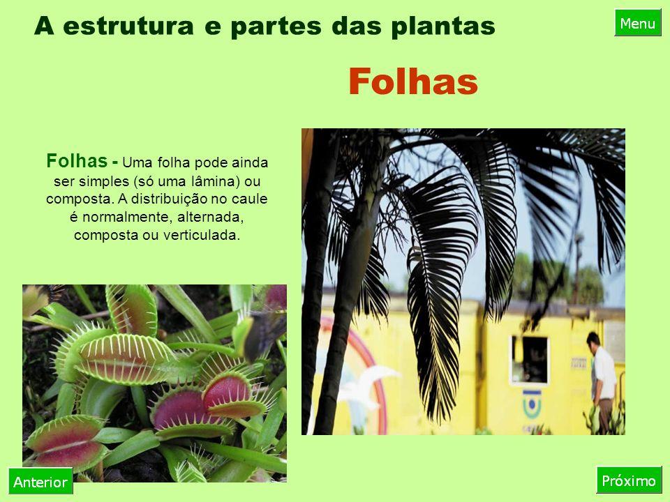 A estrutura e partes das plantas Folhas - Uma folha pode ainda ser simples (só uma lâmina) ou composta.