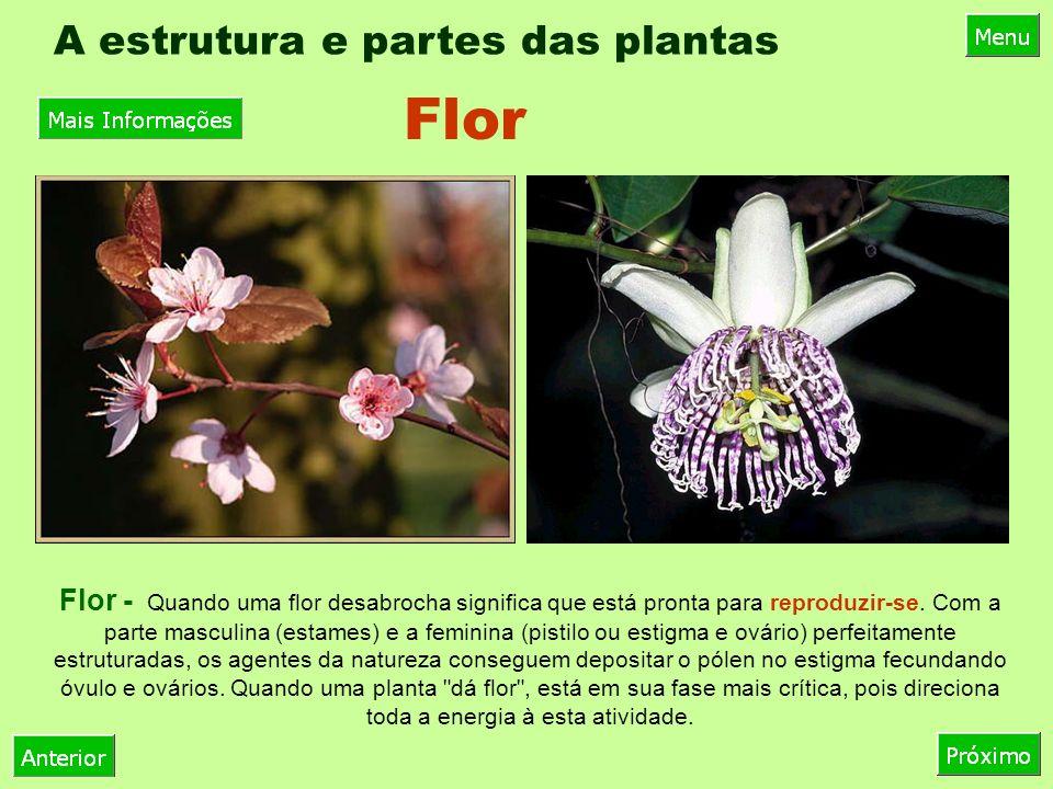 A estrutura e partes das plantas Flor - Quando uma flor desabrocha significa que está pronta para reproduzir-se.
