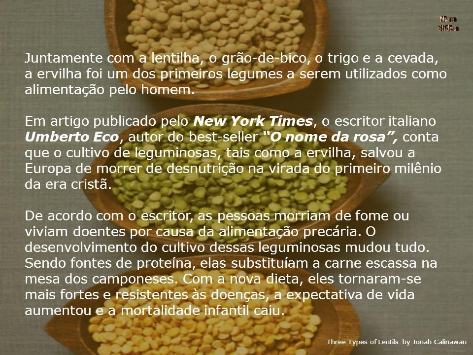 Many Fresh Green Pea - Photographic Print Existem dois tipos de grãos, o liso e o rugoso; o primeiro é menor e mais resistente, amadurecendo antes do