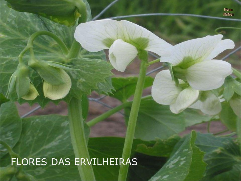 ERVILHEIRAS A planta é uma trepadeira de folhas compostas terminadas em gavinhas.