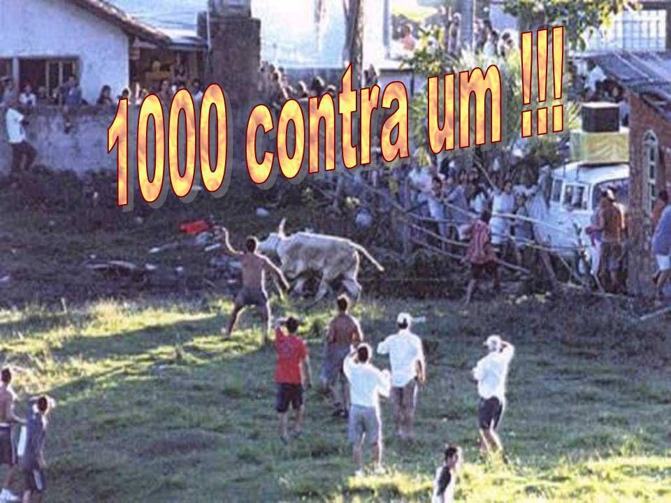 WSPA - Brasil - World Society for Protection of Animais Acapra - Assoc. Catarinense de Proteção aos Animais Instituto Ambiental Ecosul de SC ApraBlu-A