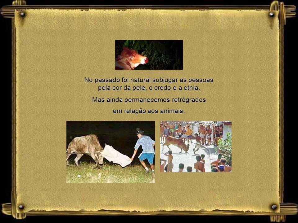Não há base legal e moral em agredir um animal inocente, sem que se tenha motivo algum contra ele. O homem não tem o direito e a justificativa de subm