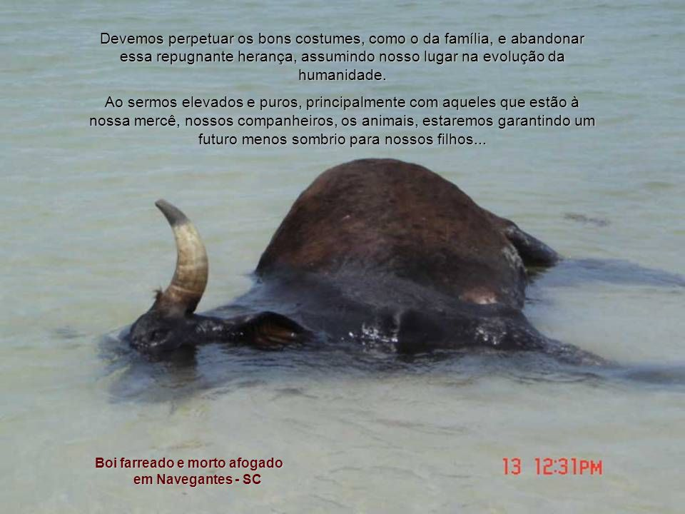 A sociedade ganha um estímulo à violência, ao incentivar farras do boi, rodeios, rinhas, circo com animais, touradas e outros costumes medievais. Um e