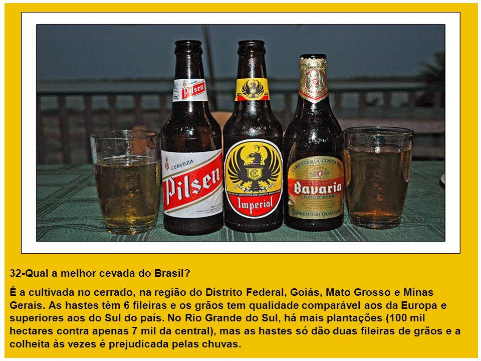 32-Qual a melhor cevada do Brasil? É a cultivada no cerrado, na região do Distrito Federal, Goiás, Mato Grosso e Minas Gerais. As hastes têm 6 fileira