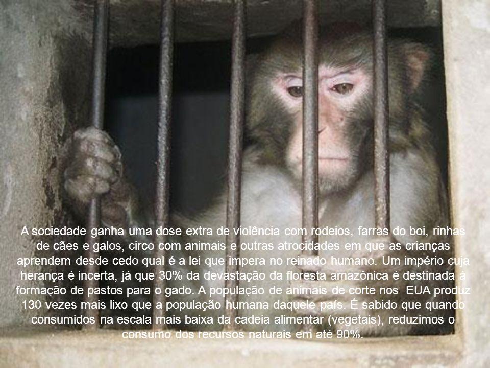 Enquanto esse dia não chega, pagamos um alto preço sofrendo de doenças ligadas ao consumo de produtos animais. Obesidade, doenças cardiovasculares, di
