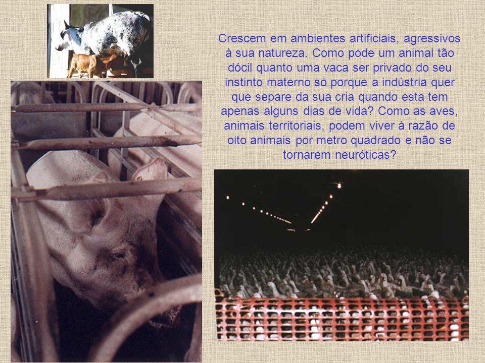 Tortura, dor, sofrimento, desolação, confinamento. Animais de várias espécies são tratados como mercadoria, apenas mais um bem de consumo. Morrem cova