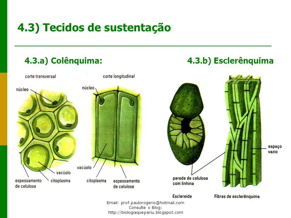 Email: prof.paulorogerio@hotmail.com Consulte o Blog: http://biologiaquepariu.blogspot.com 4.3) Tecidos de sustentação 4.3.a) Colênquima: 4.3.b) Escle