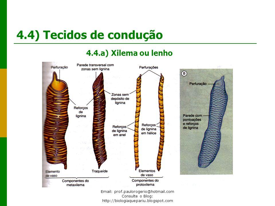 Email: prof.paulorogerio@hotmail.com Consulte o Blog: http://biologiaquepariu.blogspot.com 4.4) Tecidos de condução 4.4.a) Xilema ou lenho