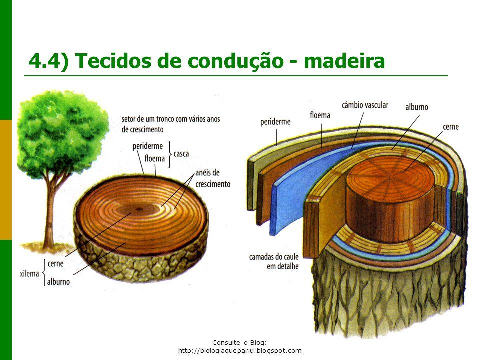Email: prof.paulorogerio@hotmail.com Consulte o Blog: http://biologiaquepariu.blogspot.com 4.4) Tecidos de condução - madeira