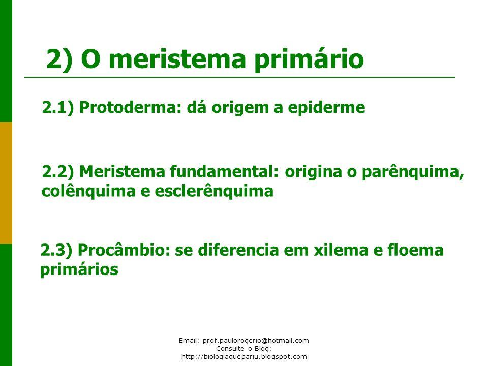 Email: prof.paulorogerio@hotmail.com Consulte o Blog: http://biologiaquepariu.blogspot.com 2) O meristema primário 2.1) Protoderma: dá origem a epider